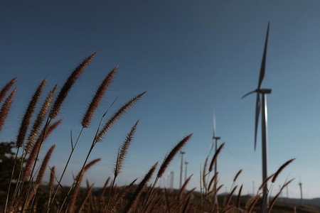 Field of grass with wind turbine