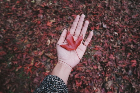Woman hand shows maple leaf