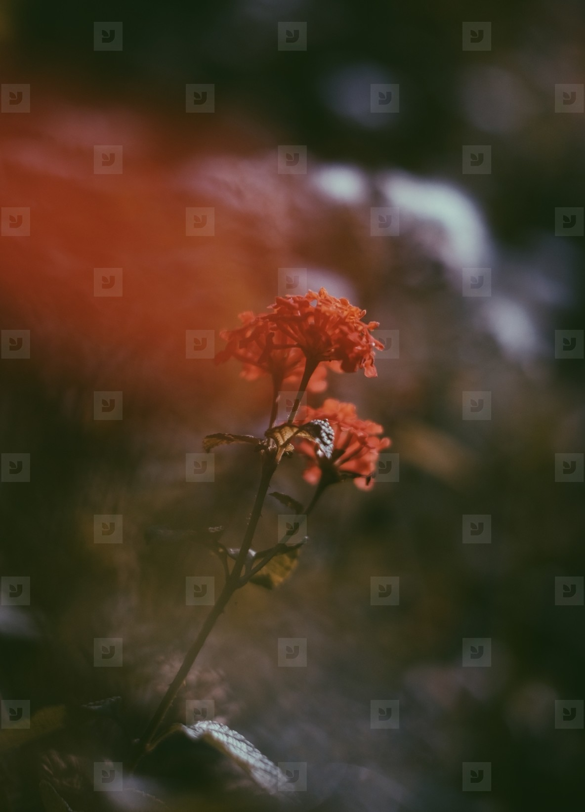 Abstract photo of flower