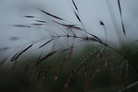Morning dew on grass 05