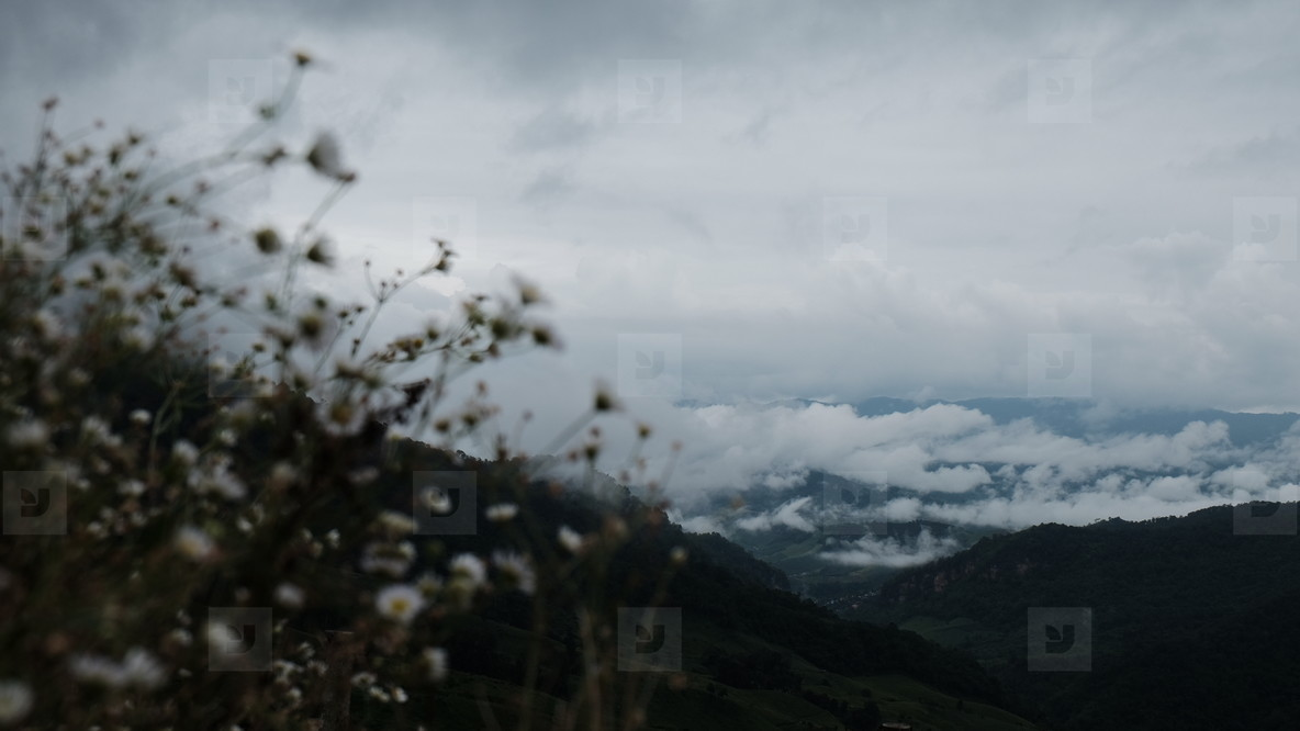 Daisy flowers and mountains view