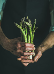 Bunch of fresh seasonal asparagus in dirty mans hands