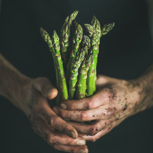 Bunch of seasonal green asparagus in dirty man s hands