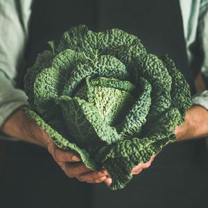 Man in black apron holding fresh green cabbagein