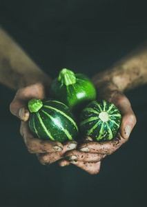 Farmer holding fresh seasonal green round zucchinis in hands