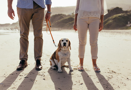 Pet dog on beach with owner couple