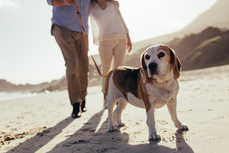 Dog walking on the beach with couple
