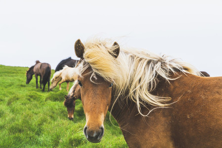Horse with a long mane