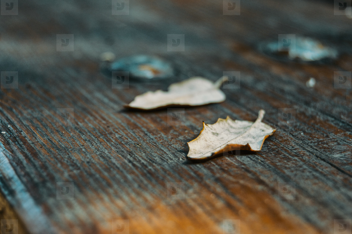 dried leaves on top of wood
