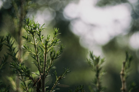 Piece of bush with bokeh background