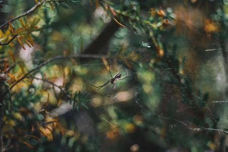 a spider among bushes in its cobweb