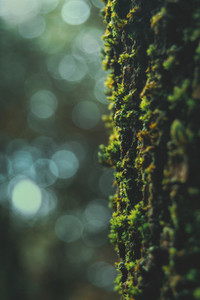 green moss on the bark of a tree with bokeh background