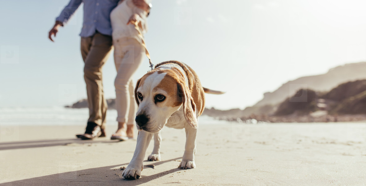 Dog morning walk at beach with owner