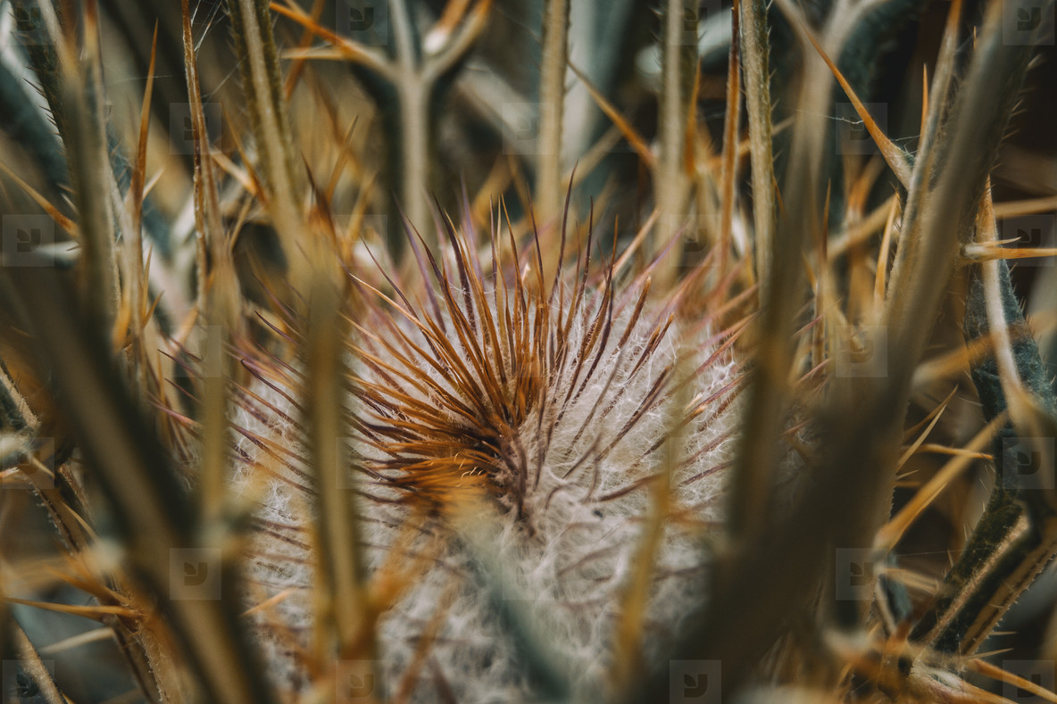 brown thistle in a field outside