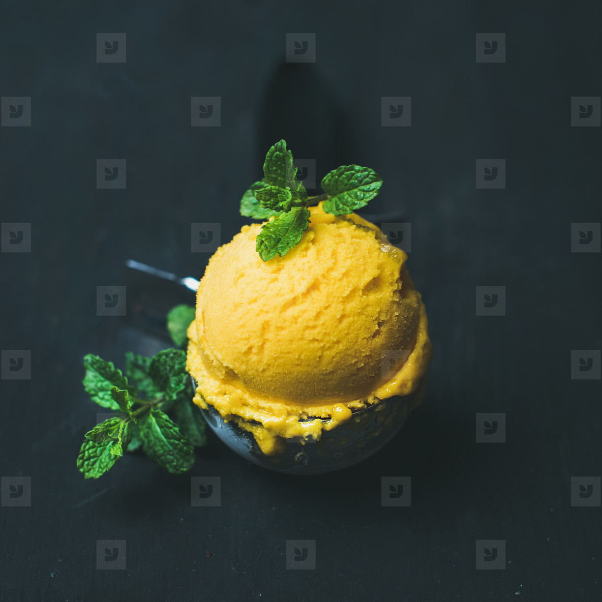 Refreshing Mango sorbet ice cream scoop in scooper  square crop
