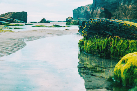 reflection of stones with seaweed on the beach