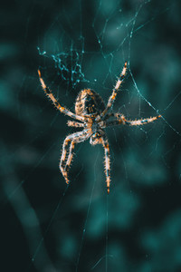 Closeup of a spider in its web