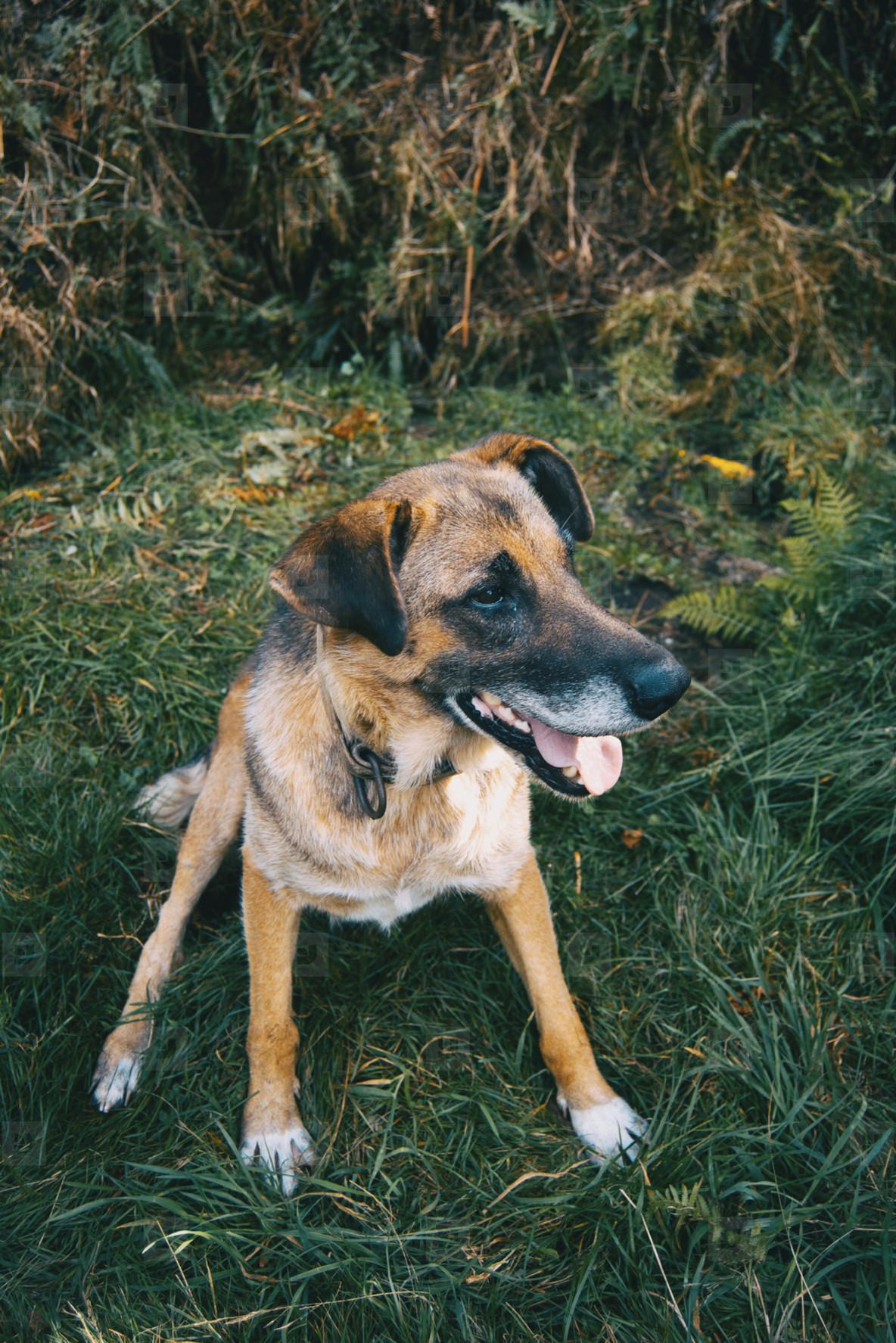 dog sitting on green grass