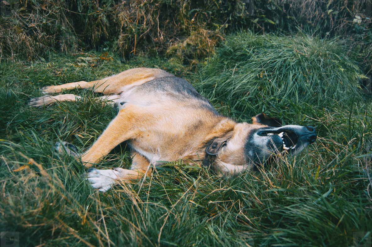 dog is lying on green grass