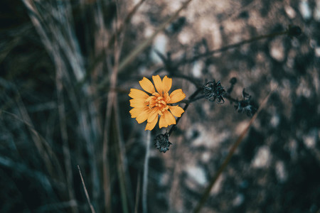 a yellow and small flower isolated