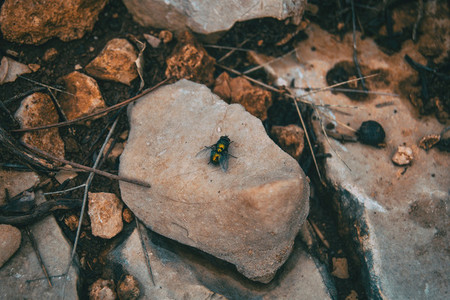big black fly on top of a stone
