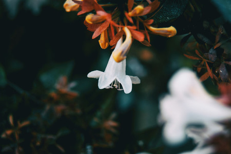 close up colorful small flower white color background
