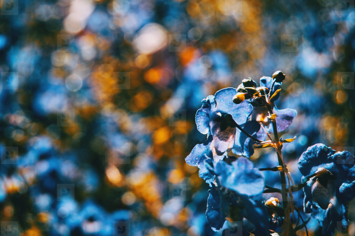 close up colorful small flower blue color background