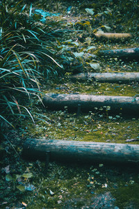 stairs with moss in dark forest