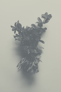 Fade Away 01