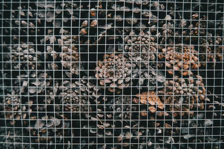 texture of pine cones behind