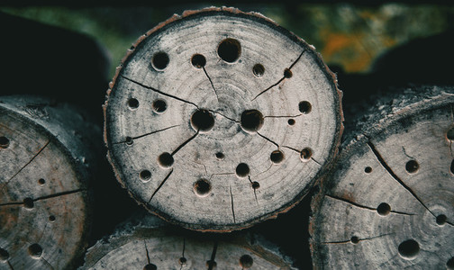 abstract texture with holes in a tree stump