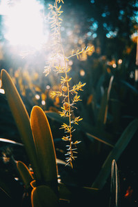 Plants with a ray of sunlight