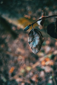 Close up of dry leaf on tree branch
