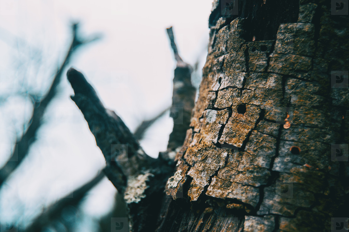Detail of the bark of a tree