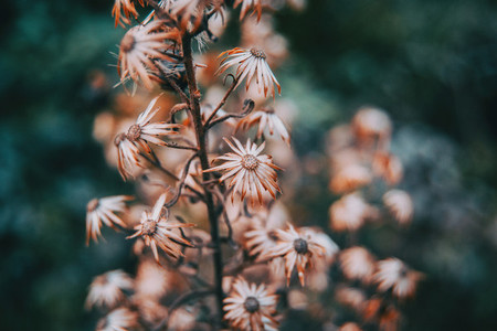 dried flowers in nature