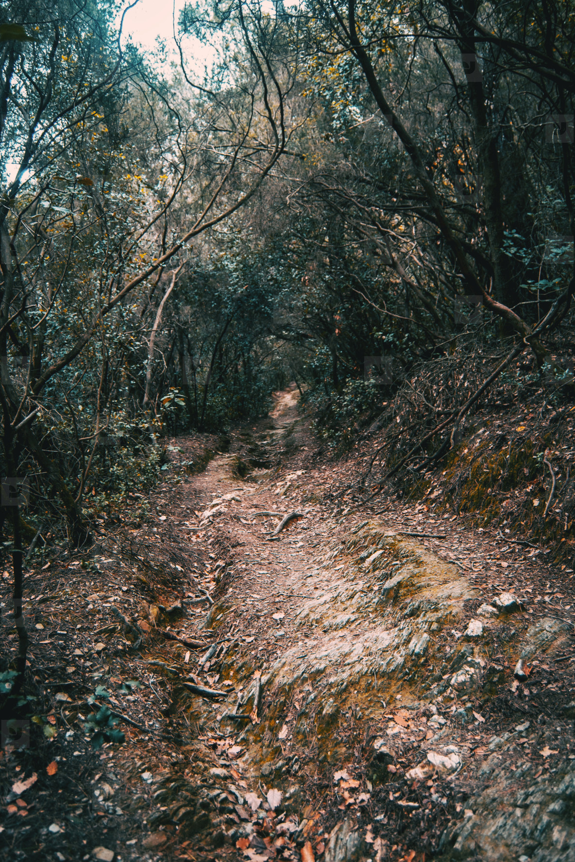 Path in the middle of the forest