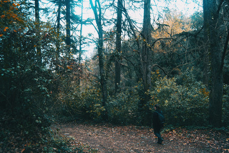Girl walking on a path in the forest