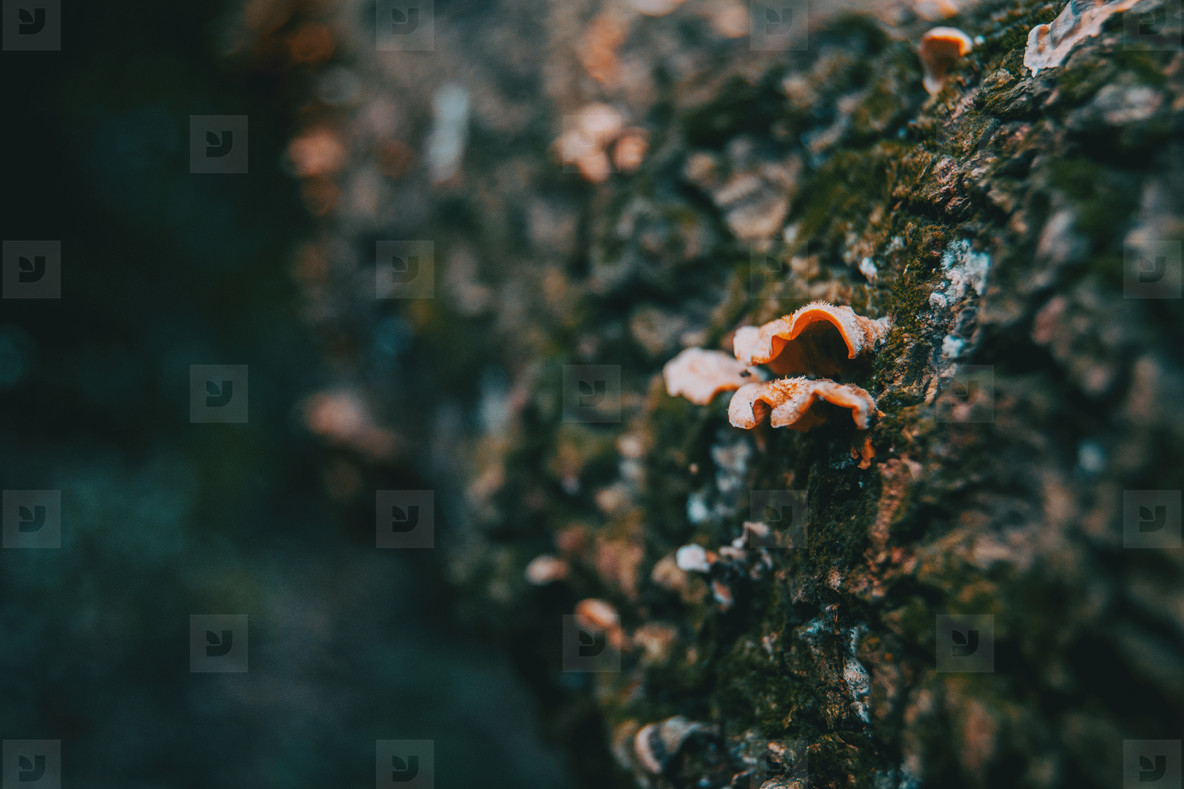 Mushrooms on the bark of a trunk