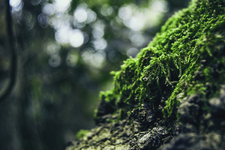closeup of green moss on top of a rock on the mountain