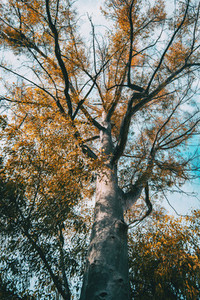 tree and trunk branches