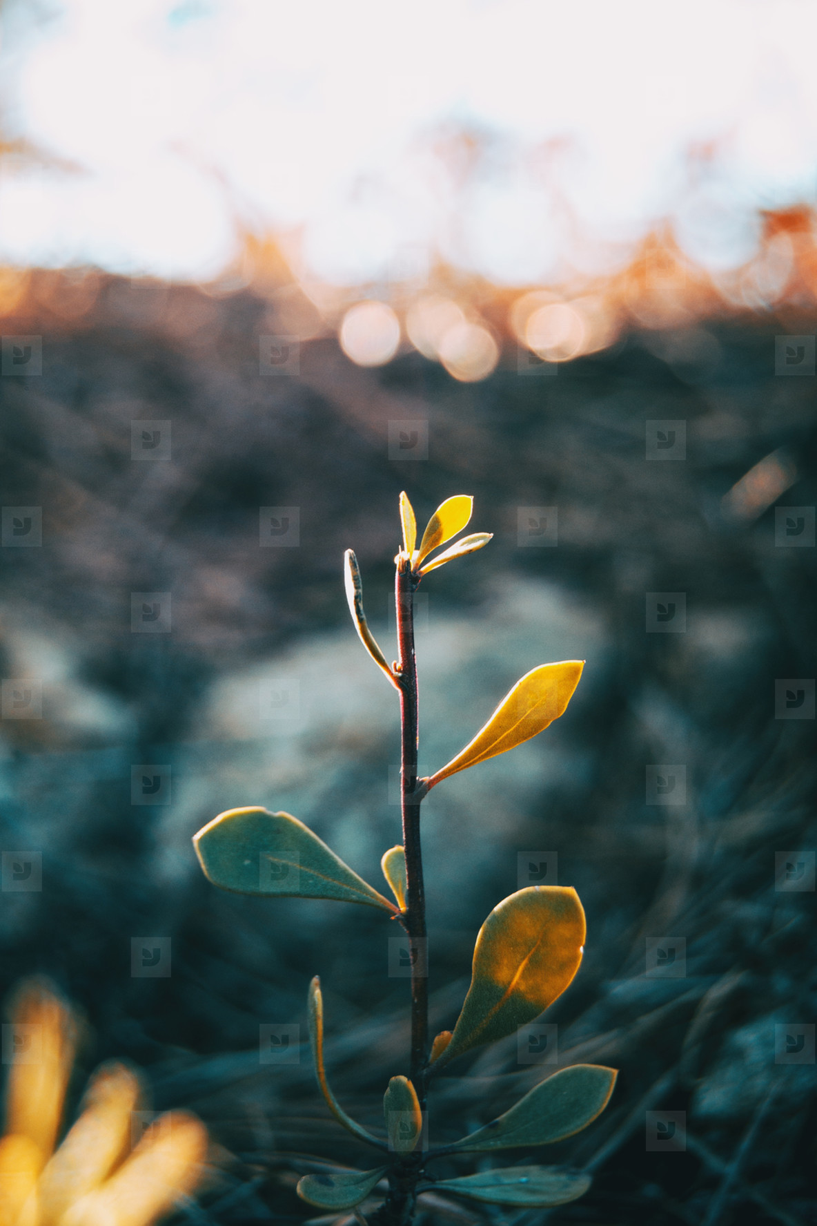 Stalk of plant isolated