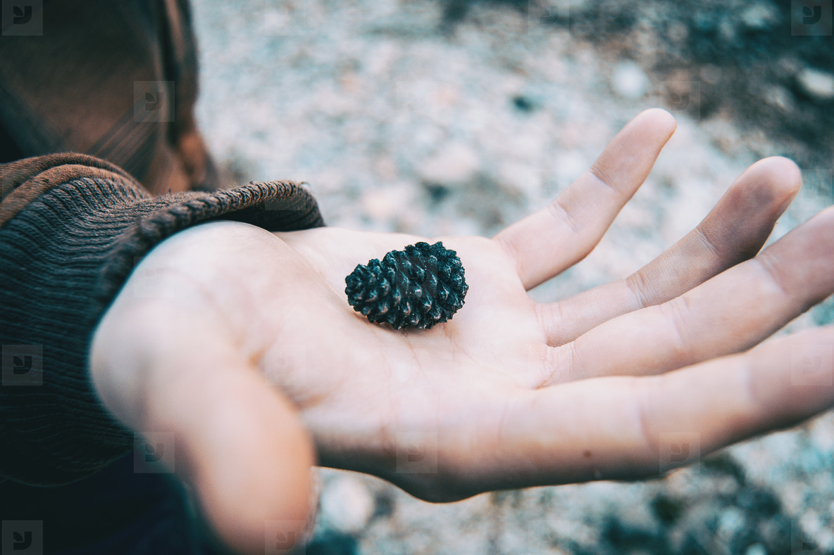 man holding a small pineapple of black pine