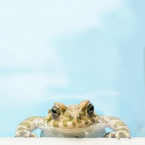 Serene Frog