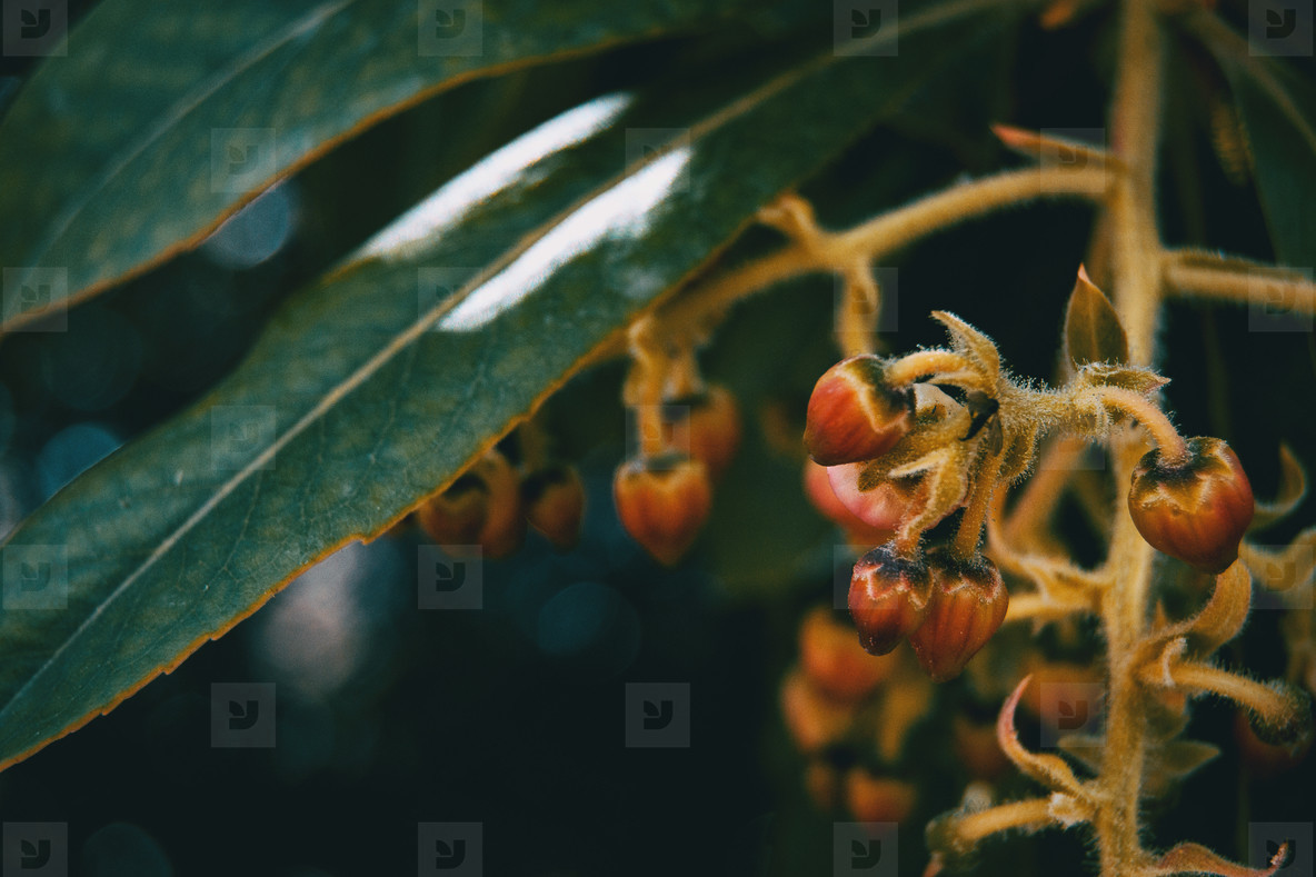 Small flowers of arbutus unedo