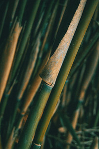 Bamboo design over background