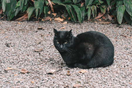 Black cat lying on the stones floor