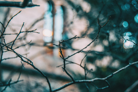 Abstract shapes with the small branches of a tree