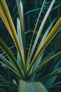 Fine and elongated leaves occupying the whole image