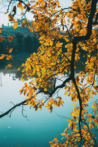 Close up of branches with yellow leaves on a lake