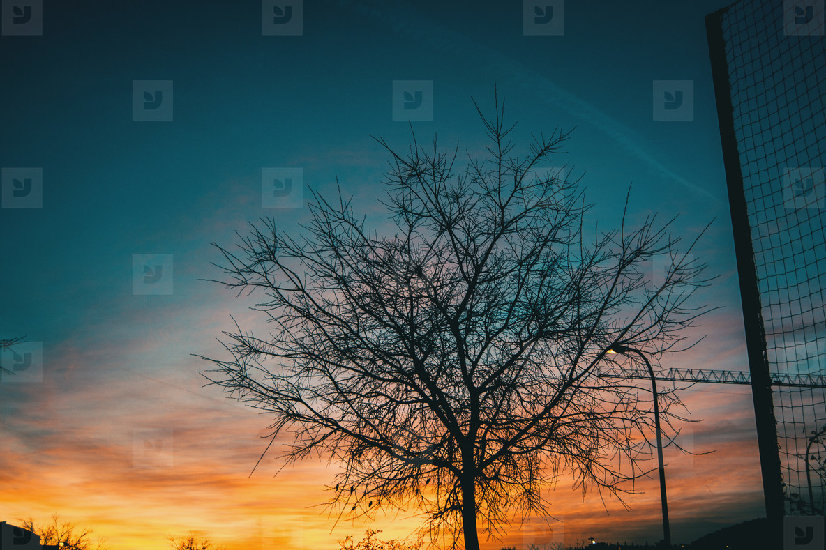 Orange and blue colors of a sunset with the silhouette of leaves